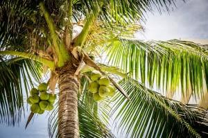 Palmový tuk a zdraví